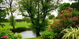Aménager un jardin bio : comment faire ?