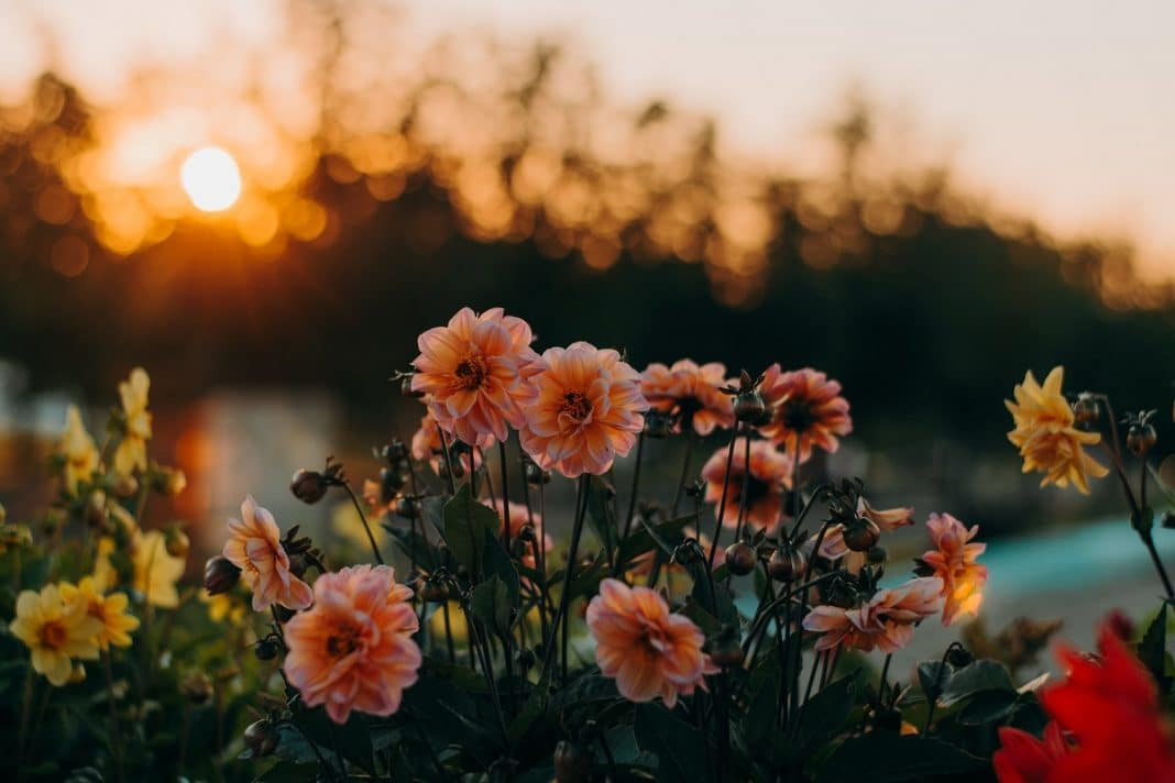 Fleurs de jardin : lesquelles devez-vous planter?