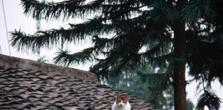 Rénovation de toiture : à qui faire appel?
