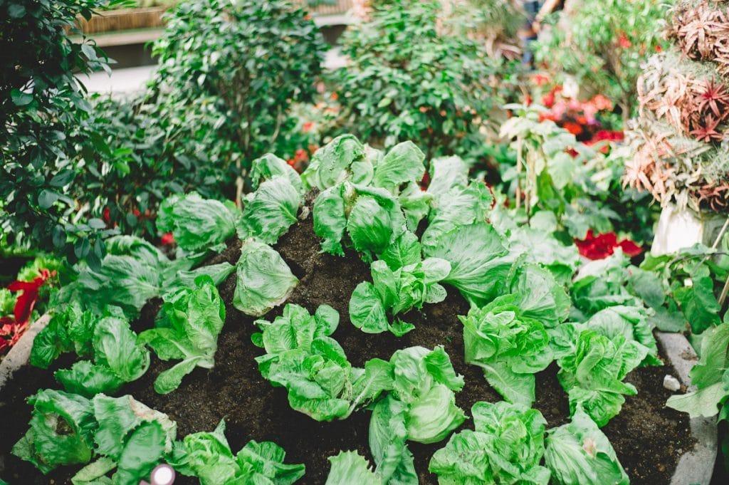 Quels légumes cultivés?