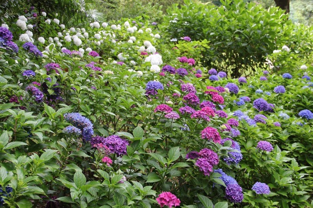 Où planter ses fleurs dans son jardin?