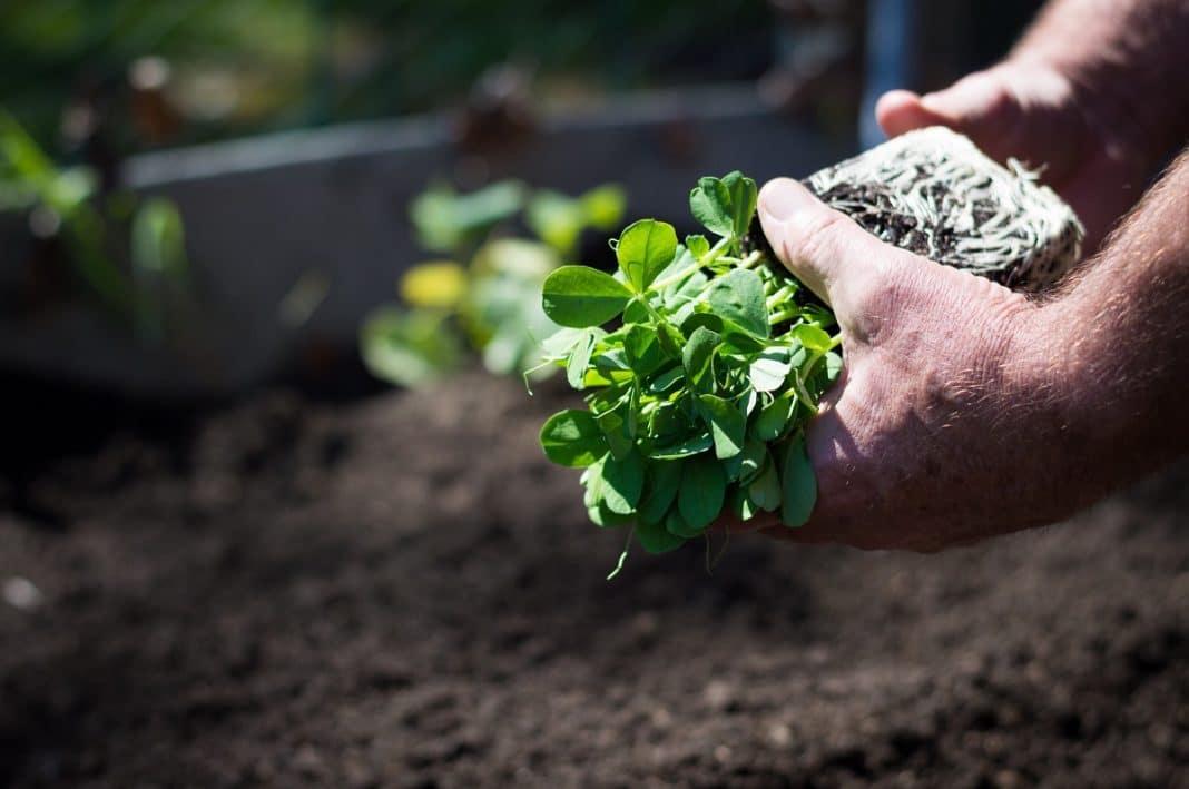 Comment créer votre propre potager bio?
