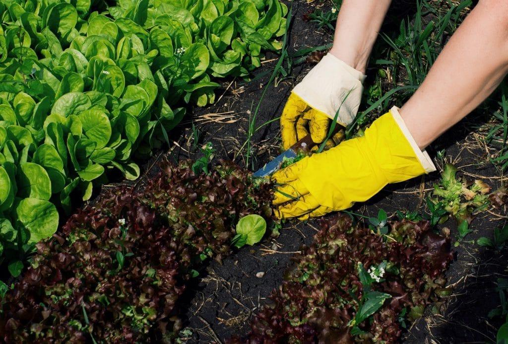 Préparer le sol pour votre potager bio