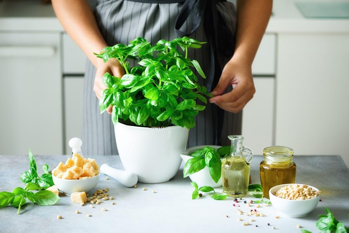 Pourquoi planter du basilic en pot ?
