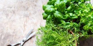 Les herbes aromatiques en pot : la bonne idée à la maison
