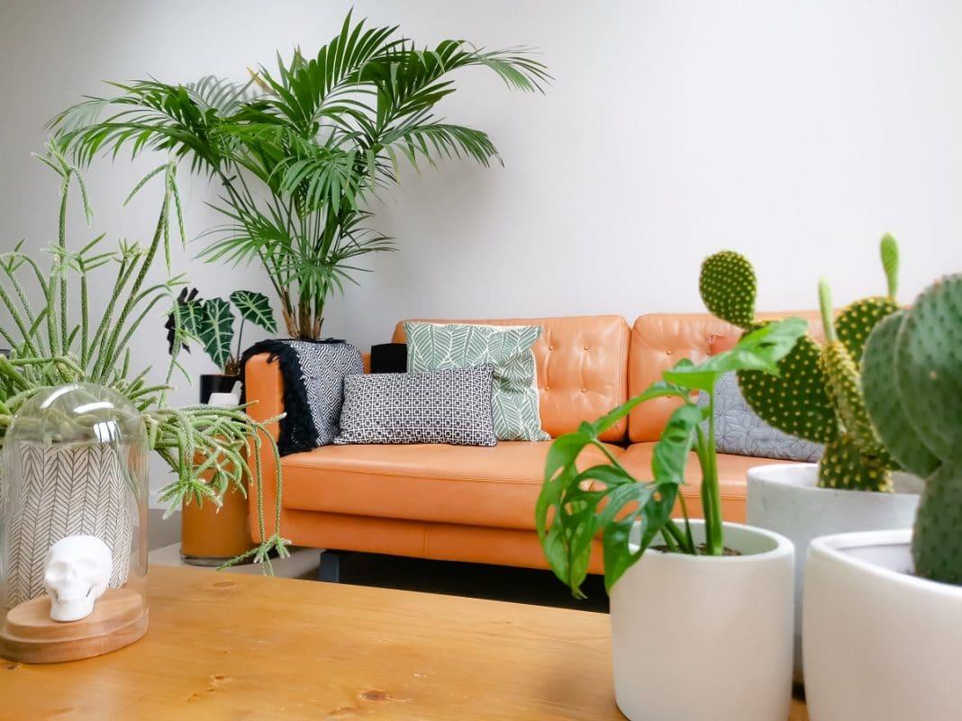 Choisir le kentia comme palmier d'intérieur