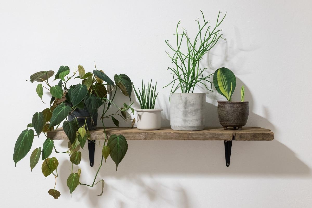 Où placer les plantes d'intérieur ?