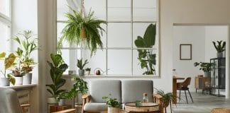Comment choisir sa plante d'intérieur ?