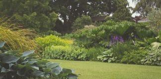 Les meilleures astuces pour un jardin sans entretien (ou presque)