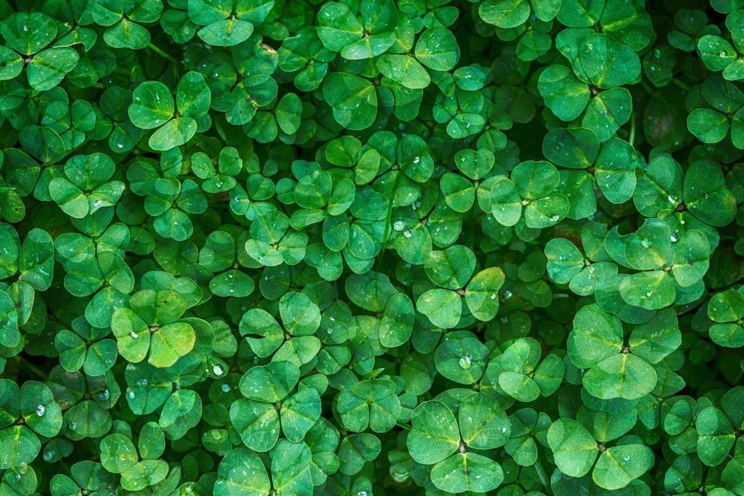 Voyez la vie en vert dans votre maison